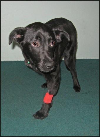baby-cora-bandage